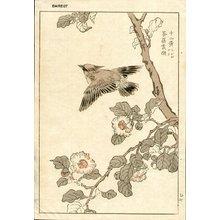 Kono Bairei: Bunting - Asian Collection Internet Auction