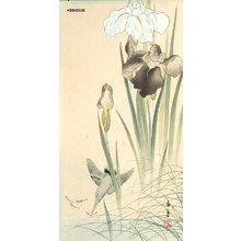 Imao Keinen: Kingfisher and iris - Asian Collection Internet Auction