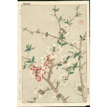 Kawarazaki, Shodo: Cherry blossoms - Asian Collection Internet Auction