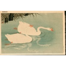 Shoson Ohara: Two geese swimming near shore - Asian Collection Internet Auction
