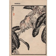 Kono Bairei: Wrens on branch, album page - Asian Collection Internet Auction