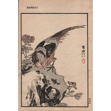 幸野楳嶺: Pheasant, one album page - Asian Collection Internet Auction