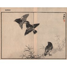 幸野楳嶺: Black birds, two album pages - Asian Collection Internet Auction