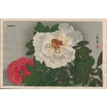 Oda Kazuma: Peonies - Asian Collection Internet Auction