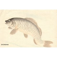 Suzuki, Shonen: KOI (carp) - Asian Collection Internet Auction