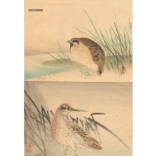 Unknown: Two book pages, partridge and sandpiper - Asian Collection Internet Auction
