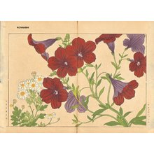 Tanagami, Konan: Salpiglossis and Matricaria - Asian Collection Internet Auction