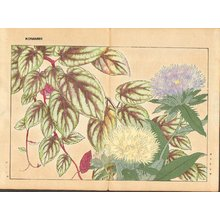 Tanagami, Konan: Stokesia and Vitis - Asian Collection Internet Auction