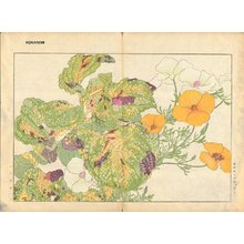 Tanagami, Konan: California Poppy and Colius - Asian Collection Internet Auction