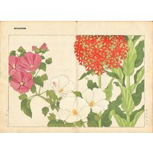 Tanagami, Konan: Lychnis and Mallow - Asian Collection Internet Auction
