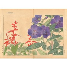 Tanagami, Konan: Melastoma and Salvia - Asian Collection Internet Auction