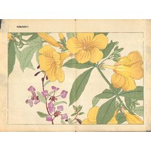 Tanagami, Konan: Allamanda and Clarkia - Asian Collection Internet Auction