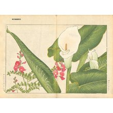 Tanagami, Konan: Callalily and Lathyrus - Asian Collection Internet Auction