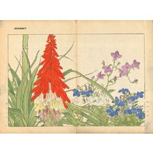 Tanagami, Konan: Lobelia and Tritoma - Asian Collection Internet Auction