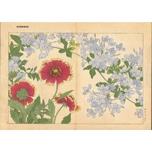 Tanagami, Konan: Plunbago and Gaillardia - Asian Collection Internet Auction
