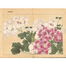 Tanagami, Konan: Pelargonium - Asian Collection Internet Auction