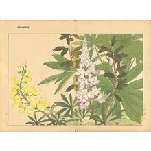 Tanagami, Konan: Lupinus - Asian Collection Internet Auction