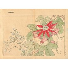 Tanagami, Konan: Passiflora and Gypsophila - Asian Collection Internet Auction