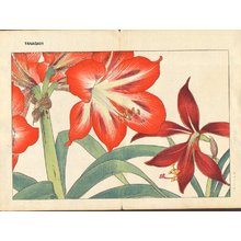Tanagami, Konan: Amaryllis - Asian Collection Internet Auction