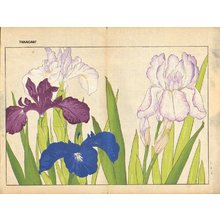 Tanagami, Konan: Iris - Asian Collection Internet Auction