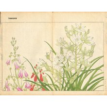 Tanagami, Konan: Ornithogalaum and Chelonanthera - Asian Collection Internet Auction