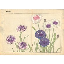 Tanagami, Konan: Centaurea - Asian Collection Internet Auction