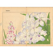 Tanagami, Konan: Vanda Caerulea and Ixia - Asian Collection Internet Auction