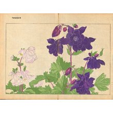 Tanagami, Konan: Aquilegia - Asian Collection Internet Auction