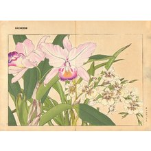 Tanagami, Konan: Oncidium and Catteya - Asian Collection Internet Auction