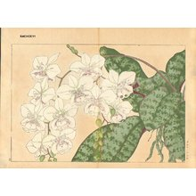 Tanagami, Konan: Phalaenopsis - Asian Collection Internet Auction