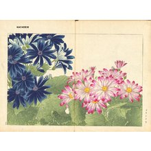 Tanagami, Konan: Cineraria - Asian Collection Internet Auction