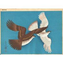 Ono, Bakufu: Hawks - Asian Collection Internet Auction