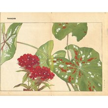 Tanagami, Konan: Caladium and Sweet William - Asian Collection Internet Auction