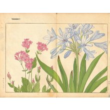 Tanagami, Konan: Agaranthus and Catchfly - Asian Collection Internet Auction