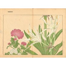Tanagami, Konan: Cambpetum Ghandiflorum and Centrantus - Asian Collection Internet Auction