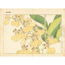 Tanagami, Konan: ONCIDIUM ORNITHORYNCHUM - Asian Collection Internet Auction