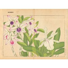 Tanagami, Konan: Laelia Blauda and Dendobium - Asian Collection Internet Auction