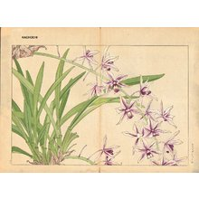Tanagami, Konan: Cymbidium - Asian Collection Internet Auction