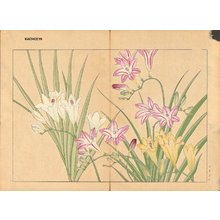 Tanagami, Konan: Freesia - Asian Collection Internet Auction