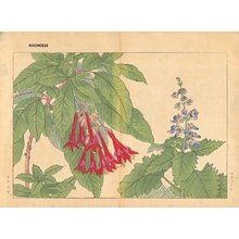 Tanagami, Konan: Coleus and Fuchsia - Asian Collection Internet Auction