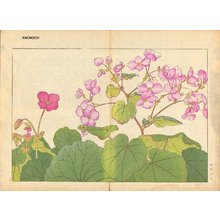 Tanagami, Konan: Begonia - Asian Collection Internet Auction