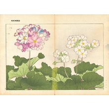 Tanagami, Konan: Primula - Asian Collection Internet Auction
