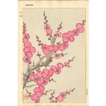 Kawarazaki, Shodo: Red Plum Blossoms - Asian Collection Internet Auction