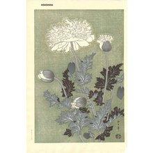 Asada Benji: Poppy - Asian Collection Internet Auction